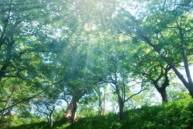 陽のさす森