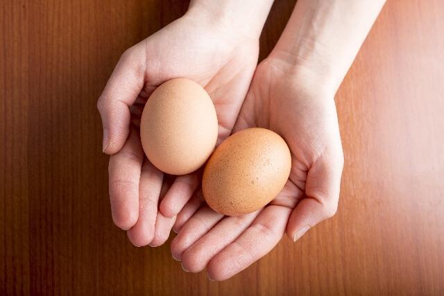 手のひらに乗せた卵